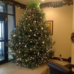beautiful christmas tree in the lobby