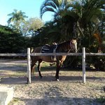 Beautiful horses in very good condition.