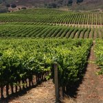 Solvang Taxi and Wine Tours