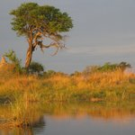 Divava Okavango Lodge & Spaの写真