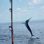 Come out with us and catch a Marlin.