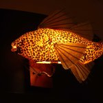 Illuminated fish lamp on wall! The ambience is awesome in this restaurant!