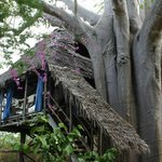 the tree house 2