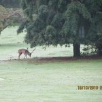 View of a stag from dining room at breakfast