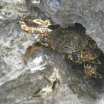 Crab in the rocks