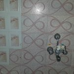 Multi Design Tiles, No exhaust Fans & No Dustbins