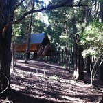Lovely forest setting for the cabins