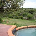 Foto de Amakhala Safari Lodge