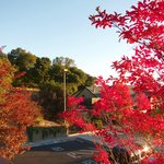 Foto BEST WESTERN PLUS Novato Oaks Inn