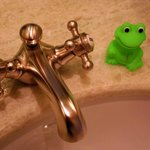 Froggy waits sink-side