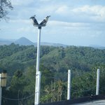 Foto van Cooroy Country Cottages