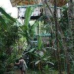 Tropical Treehouse resmi