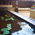 Indoor Pond & the Plunge Pool
