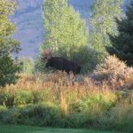 Foto van Teton View Bed & Breakfast