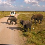 Happy elephants in lovely Amboseli - KET Safari