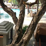 Photo de Padma Resort Bali at Legian