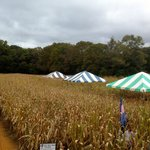 Rural Hill 2013 Amazing Maize Maze Orientation tents