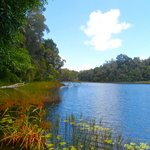 Lake Barrine Rainforest Cruise and Teahouse Foto