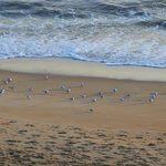 View from Hotel Room: Seagulls