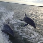 Dolphins playing in the wake of the boat!