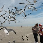 "Location is not too far from a Galveston beach that you can ""feed the birds""."