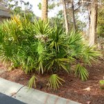 Photo de Hilton Garden Inn Hilton Head