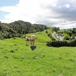 Foto van YHA Waitomo Juno Hall Backpackers