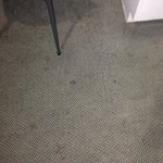 Disgusting carpet needs replacing urgently