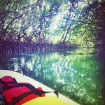 Paddle boarding in the mangrove caves