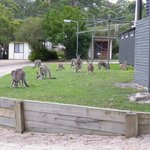 Photo de Big4 South Durras Holiday Park