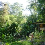 Foto de El Tucan Jungle Lodge