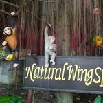 Φωτογραφία: Natural Wing Health Spa & Resort