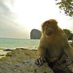 Krabi Nature View Guesthouse의 사진