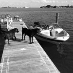 Sparky and Bulldozer check out our boat