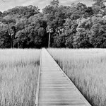 Edisto Beach State Park Campgroundの写真