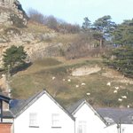 The Great Orme Goats sunbathing.
