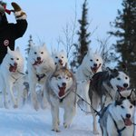exciting dogsled