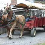Our Transportation back to the Tour Bus.  Picture 10