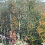 View of the fall foliage from the wagon.  Picture 4,