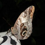 Nicaragua Butterfly Reserve Foto