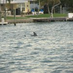One of the 2 dolphins that came by to entertain us