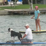 Paddleboarders looking for their dogs (dolphin) playmates!