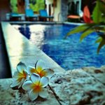 Frangipani on the pool side :)