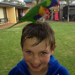 The Rainbow Lorikeets