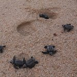Newborn turtles vs shoe size