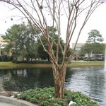Courtyard Jacksonville Mayo Clinic/Beaches Foto