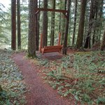 A place to sit & enjoy the forest