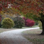 Fall colors at the Planting Fields