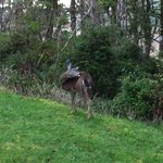 Deer outside Cape Blanco Room