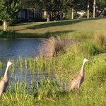 The Country Club of Mount Dora Foto